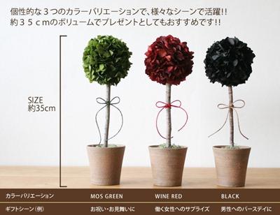 topiary_info